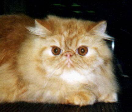 A Red Persian CPC