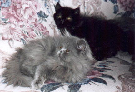 Blue, Black Persians