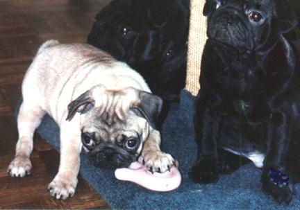 PePe (not for sale) & His Siblings